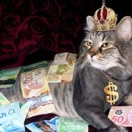 Pet influencers: los reyes del social media